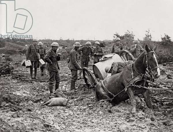 Horse stuck in the mud on the Western Front, Flanders, 1914-18 (b/w photo)