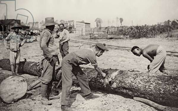 Chinese labourers felling timber for road making, Flanders, 1914-18 (b/w photo)