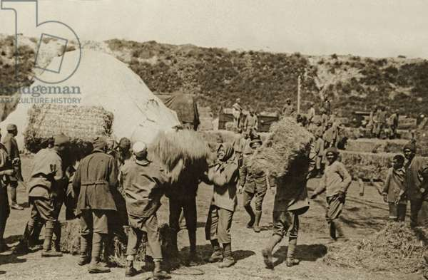 An Egyptian labour party at work carrying hay, Western Front, 1914-18 (b/w photo)