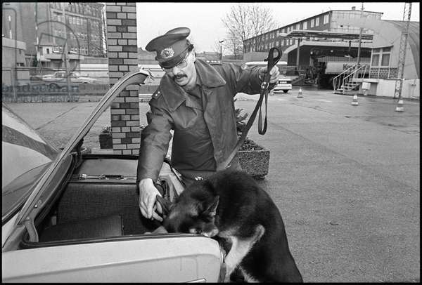 East German customs officer and sniffer dog searching a car boot following the opening of the Berlin Wall, 7th March 1990 (b/w photo)