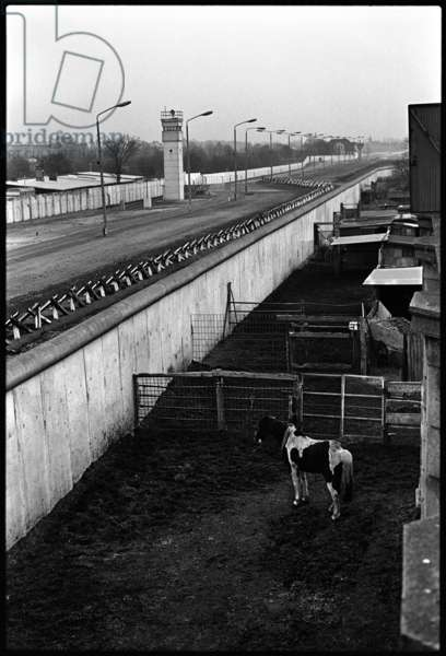 Riding club stables backing onto the Berlin Wall, 1985 (b/w photo)