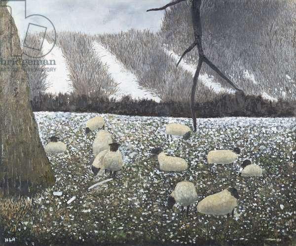 Suffolk Sheep on Winter Field, 1991 (oil on board)