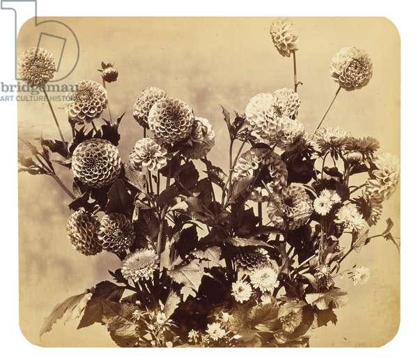 Untitled, c. 1860 (albumen print)