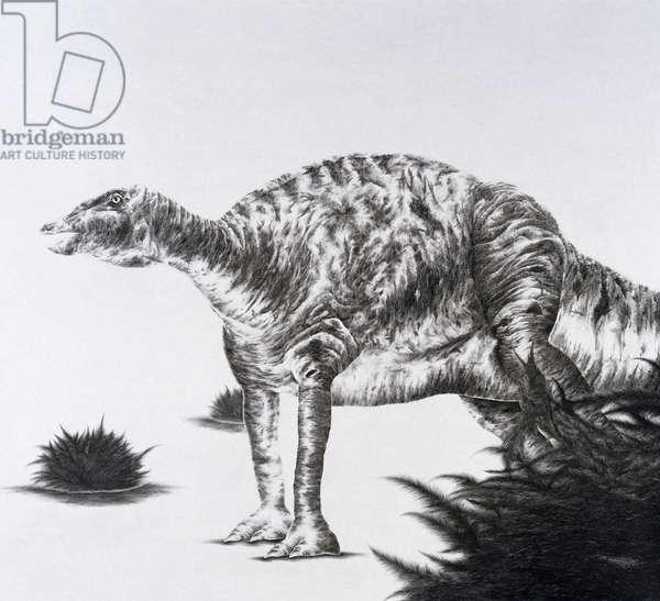 Iguanadon, 2003 (graphite on paper)