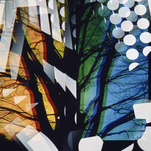 Untitled, 1995 (silver dye bleach print, printed 1995)