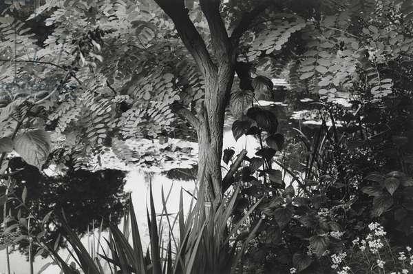 Monet's Garden at Giverny, 1992, printed 1994 (gelatin silver print)