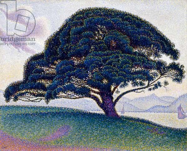 The Bonaventure Pine, 1893 (oil on canvas)