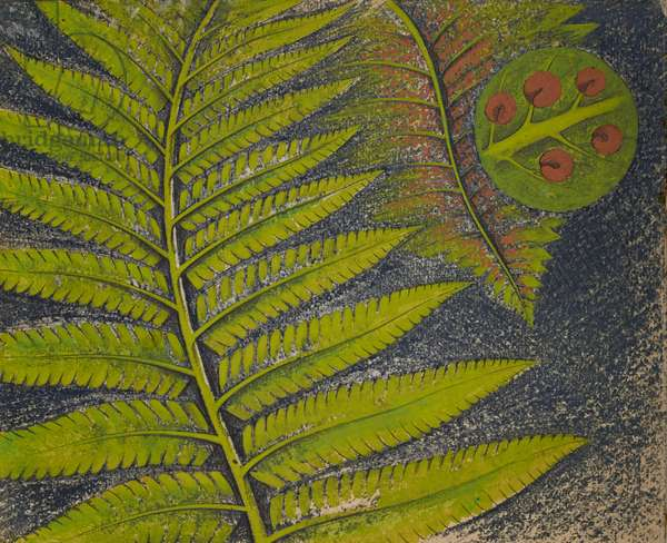 Fern with (inset, magnified) Spore Case, 1948 (w/c on paper)