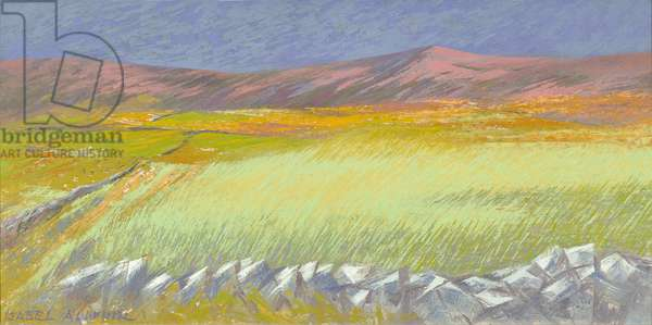 Cornfield, Isle of Coll, 1971 (oil on canvas)