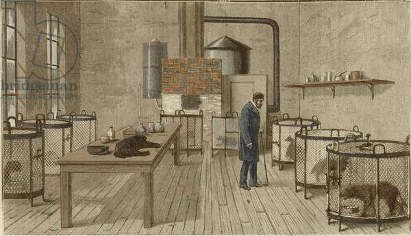 Dogs in cages inside laboratory of Louis Pasteur (1822-1895)