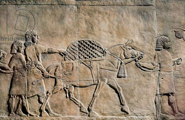 Ashurbanipal hunting, detail showing servants and horse carrying cage, relief from Nineveh, Iraq (stone bas relief)