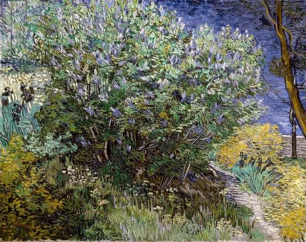 Le buisson de lilas. Vincent VAN GOGH (1853-1890), 1889 Huile sur toile Musee de l'Ermitage.
