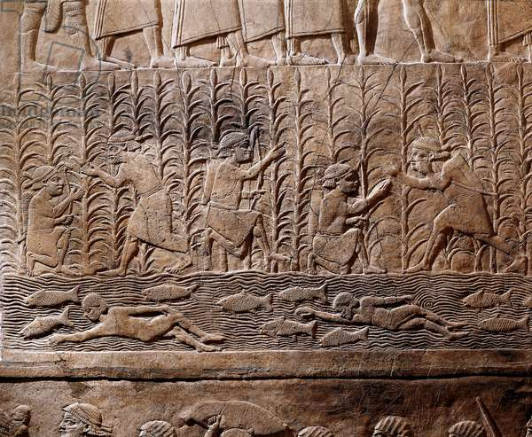 Scene of agricultural work and swimmers in river, from Royal Palaces of Nineveh, relief, c.645 BC (stone bas-relief)