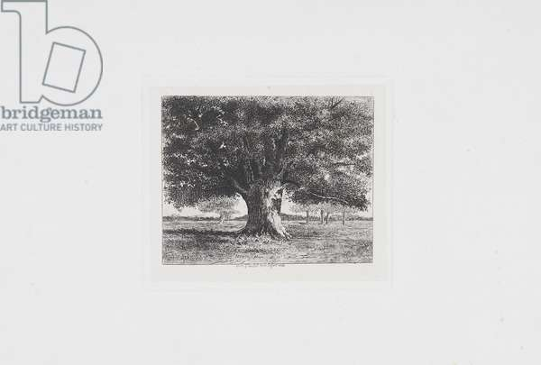 The Oak of Flagey (19th century)