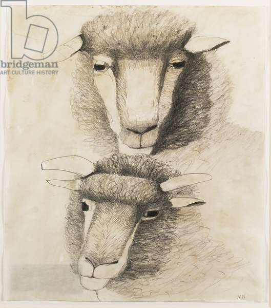 Dorset horned polled ram and young ram (pencil & w/c on paper)