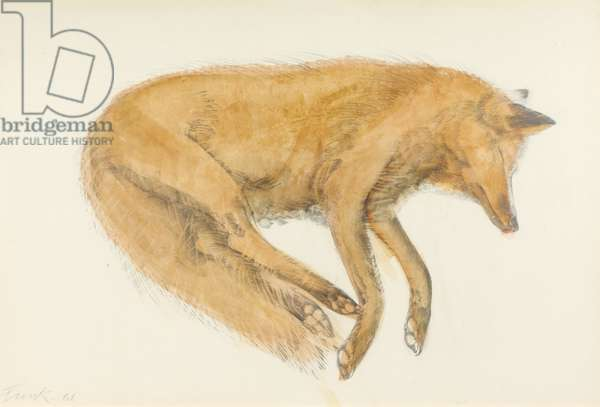Sleeping Fox, 1968 (w/c & pencil on paper)