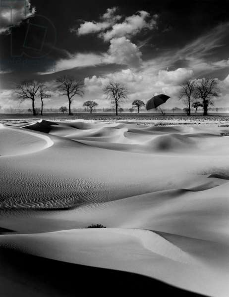 Acid Rain, 1988 (b/w photo)