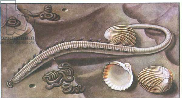 Near the breakwater , from colour Liebig postcard, 1940's (colour litho)