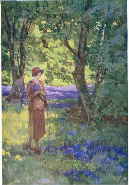 Bluebells and Daffodils in an English wood  (colour litho)