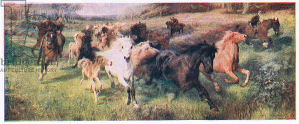 Colt hunting in the New forest, illustration from My Magazine (Arthur Mee), c.1920-30 (colour litho)