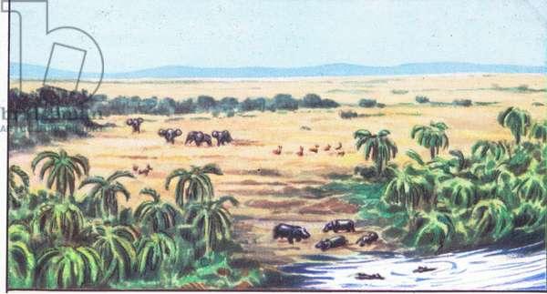The National Albert Park: The Plains of Rutsuveir, from colour Liebig postcard (colour litho)