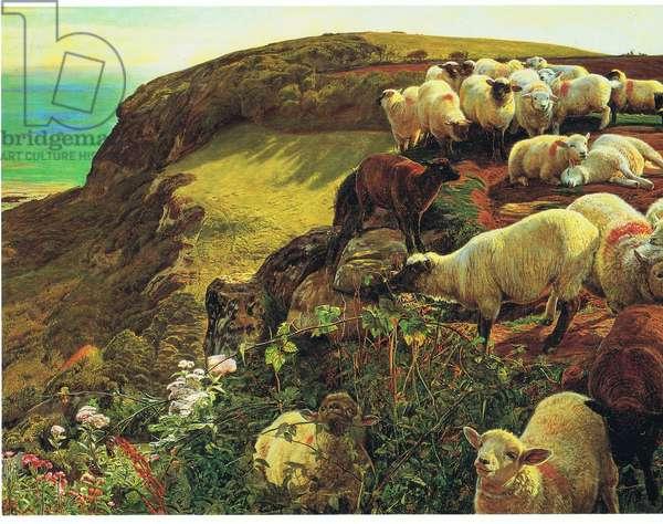 Strayed sheep (colour litho)
