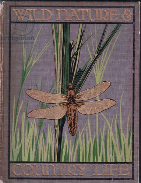Front board design, illustration from Wild Nature & Country Life published by Hodder & Stoughton, c.1910 (colour litho)