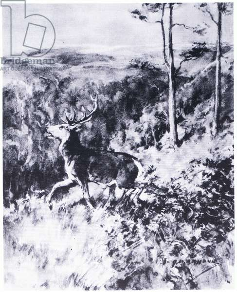 The smaller stag had had enough and limped away (litho)