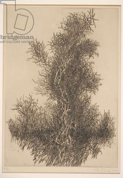 Untitled, 1959 (etching and engraving)