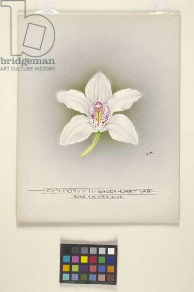 Orchid: Cymbidium Morvyth Brockhurst Var. (watercolour on whatman's water colour sketching board)
