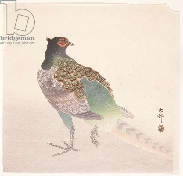 Pheasant (colour woodblock print)
