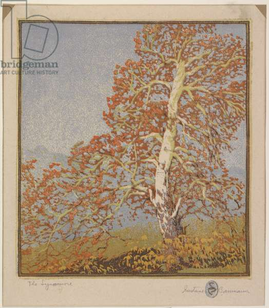 The Sycamore, 1916 (colour woodblock print)