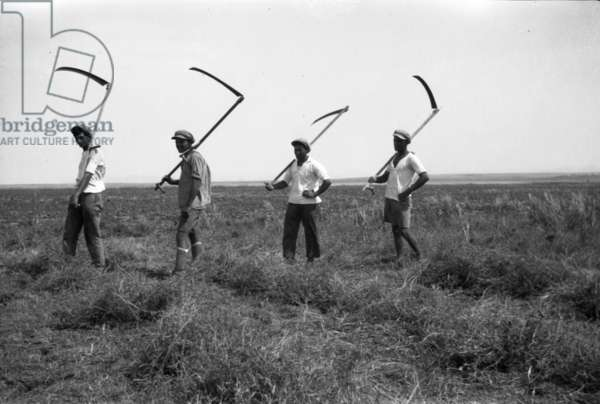 Four field workers with their tools on their shoulders, 1908-50 (b/w photo)