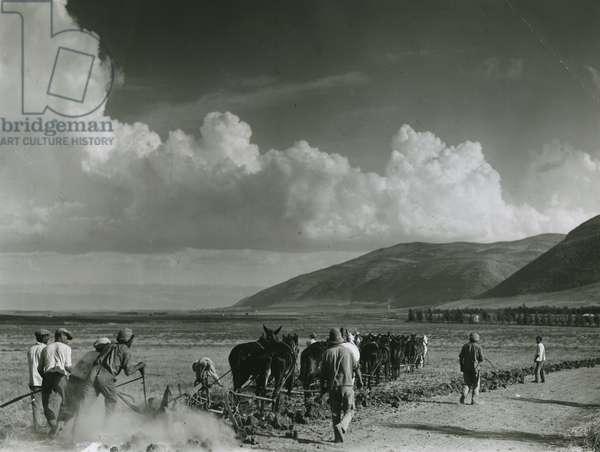 Tilling the soil (b/w photo)