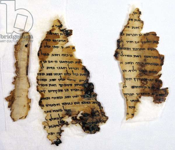 Fragments of the Temple Scroll (parchment)
