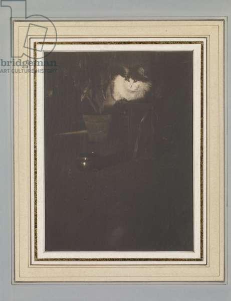 Untitled, c.1900 (platinum print)