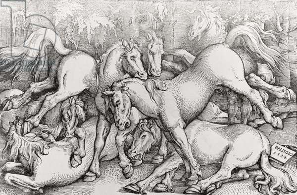 Group of Seven Wild Horses, 1534 (woodcut) (b/w photo)