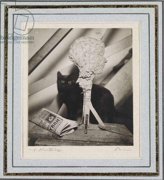 Cat, 1927 (gelatin silver print)