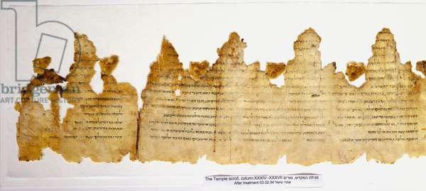 Section of the Temple Scroll, columns 34-37, Qumran cave 11, c.100 BC- 100 AD (parchment)