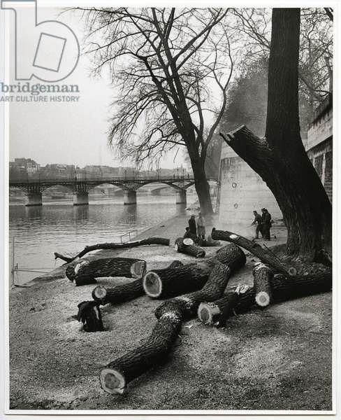 The Tree, Paris, 1963 (silver gelatin print)