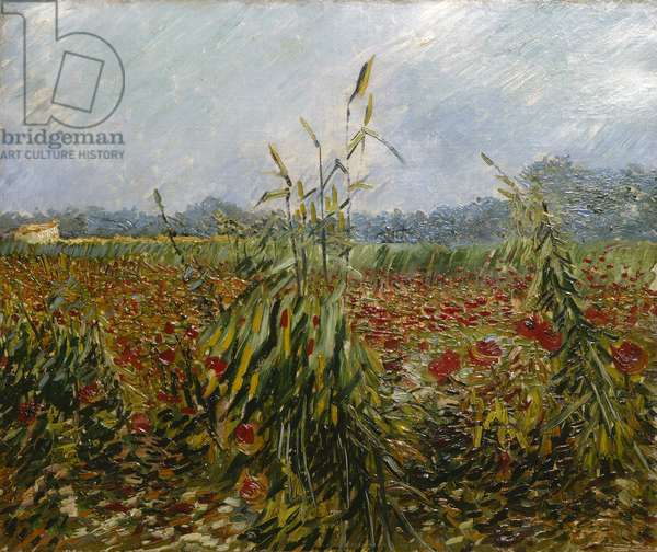 Corn Fields and Poppies, 1888 (oil on canvas)