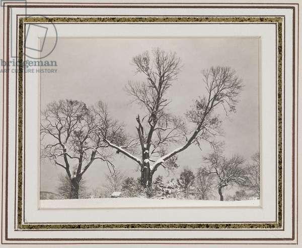 Trees in Winter, c.1923 (gelatin silver print)