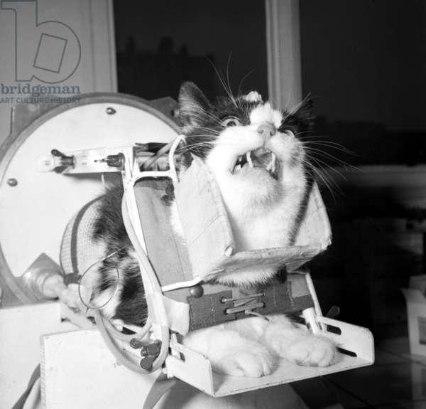 Felicette, astronaut cat
