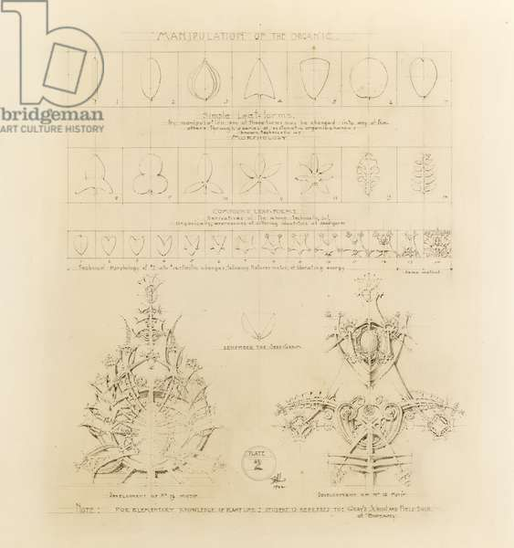 System of Architectural Ornament: Plate 2, Manipulation of the Organic, 1922-23 (graphite on strathmore paper)