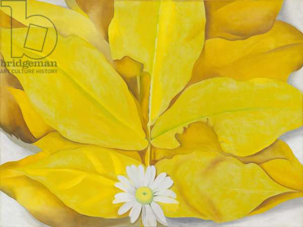 Yellow Hickory Leaves with Daisy, 1928 (oil on canvas)
