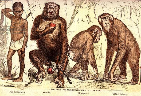 Evolution of mammals to the human type: Natural Creation and Living Beings (De Jules Rengade). Drawing by A. Demarle. 1885
