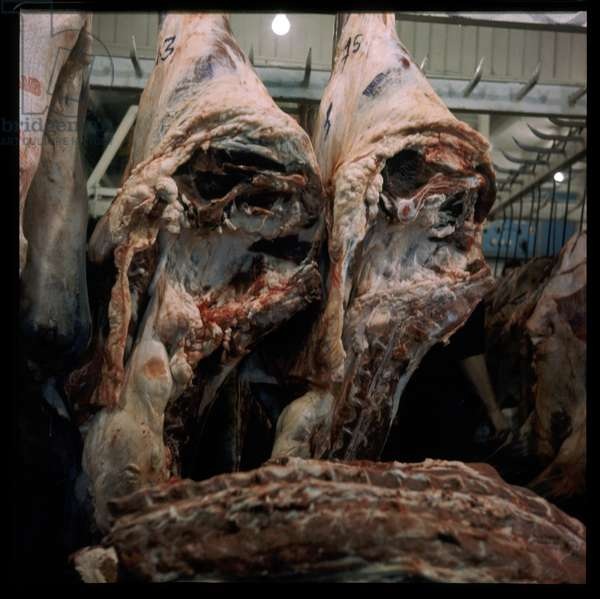 Butchered meat hanging in a store, possibly taken for Francis Bacon, early 1960's