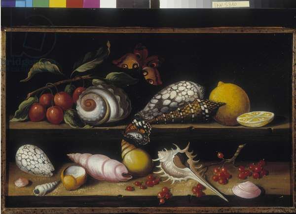 Shells, fruits and butterflies. Anonymous painting, 19th century French school. Mandatory mention: Collection fondation regards de Provence, Marseille (Dim in cm 25x40)