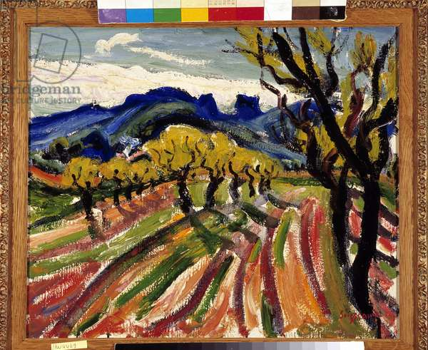 Field of olive trees in the Alpilles (oil on canvas)