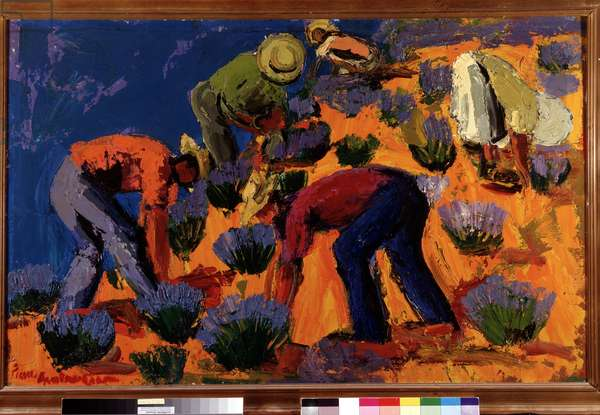 Lavender pickers in Sault in the Vaucluse (gouache)